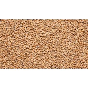 Солод IREKS Wheat Malt dark, 14-18 (Германия)